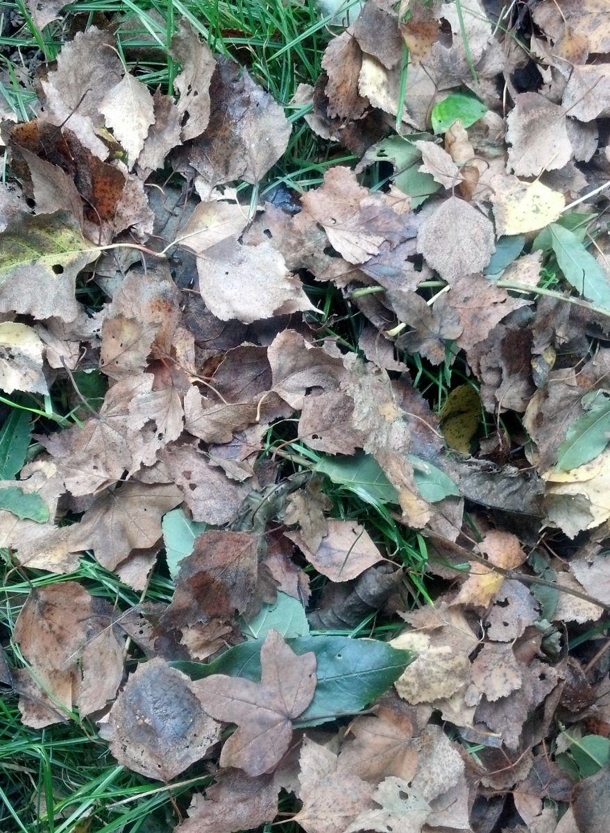 ramasser les feuilles mortes l automne lelision. Black Bedroom Furniture Sets. Home Design Ideas